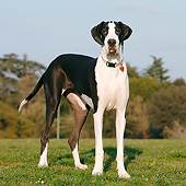 DOG 01 CB0138 01
