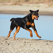 DOG 01 CB0140 01
