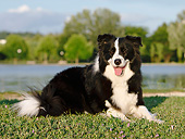 DOG 01 CB0145 01