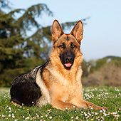 DOG 01 CB0151 01