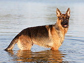 DOG 01 CB0154 01
