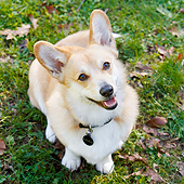 DOG 01 CB0161 01
