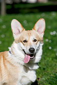 DOG 01 CB0162 01