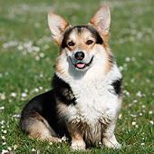 DOG 01 CB0163 01