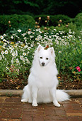 DOG 01 CE0009 01