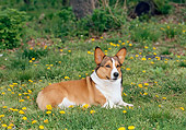 DOG 01 CE0235 01