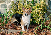 DOG 01 CE0236 01