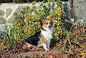 DOG 01 CE0237 01