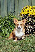 DOG 01 CE0238 01