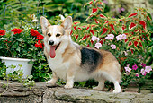 DOG 01 CE0239 01