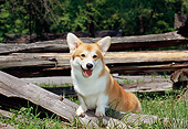DOG 01 CE0245 01