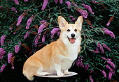 DOG 01 CE0246 01