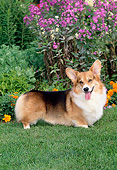 DOG 01 CE0250 01