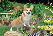 DOG 01 CE0251 01