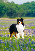 DOG 01 DC0176 01