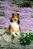 DOG 01 FA0005 01