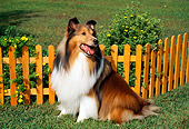 DOG 01 FA0007 01
