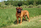 DOG 01 FA0015 01