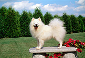 DOG 01 FA0056 01