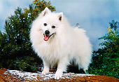 DOG 01 FA0058 01