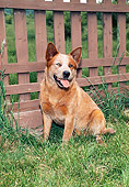 DOG 01 FA0059 01