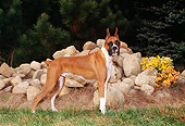 DOG 01 FA0068 01