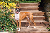 DOG 01 FA0070 01