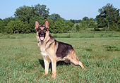 DOG 01 FA0075 01