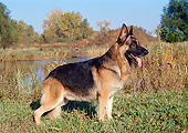 DOG 01 FA0077 01