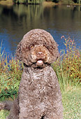 DOG 01 FA0087 01