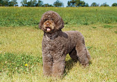 DOG 01 FA0088 01