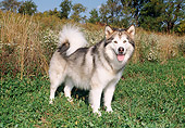 DOG 01 FA0089 01