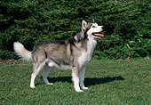 DOG 01 FA0090 01