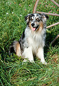 DOG 01 FA0096 01