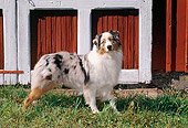 DOG 01 FA0098 01