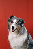 DOG 01 FA0099 01