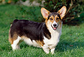DOG 01 GL0002 01