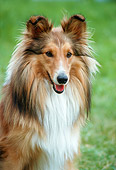 DOG 01 GL0005 01