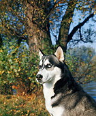 DOG 01 GL0007 01