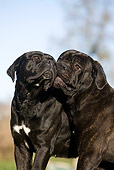 DOG 01 GL0008 01