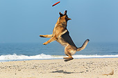 DOG 01 GL0016 01