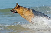 DOG 01 GL0018 01