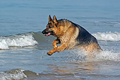DOG 01 GL0021 01
