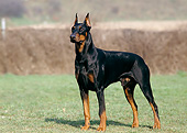 DOG 01 GL0023 01