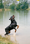 DOG 01 GL0025 01