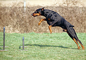 DOG 01 GL0027 01