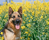 DOG 01 GL0028 01