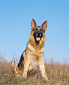 DOG 01 GL0029 01