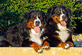 DOG 01 IC0003 01
