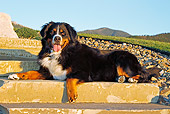 DOG 01 IC0004 01